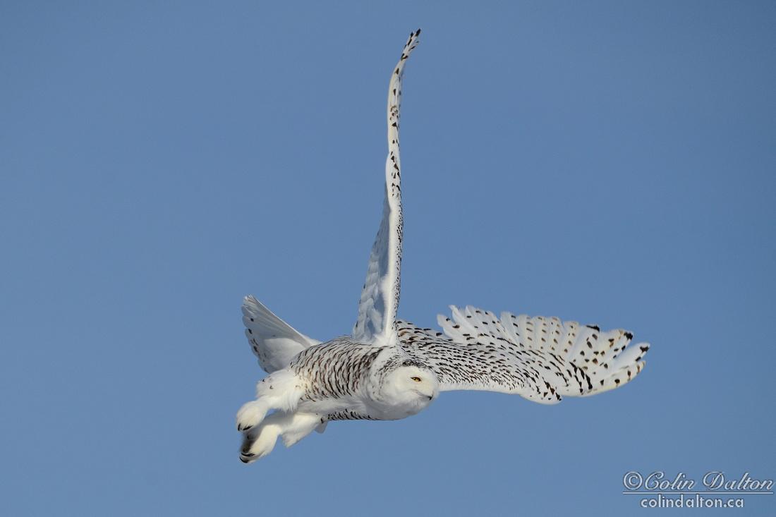 Flight Fantastic